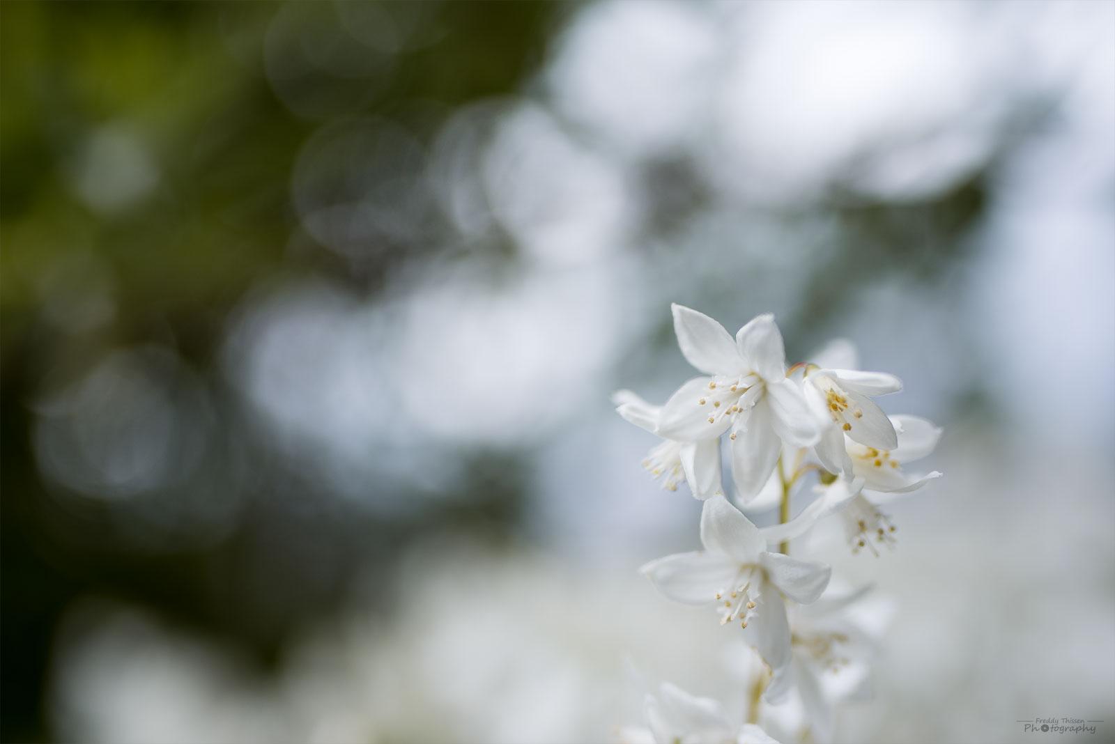 Die Blüten mit viel Bokeh