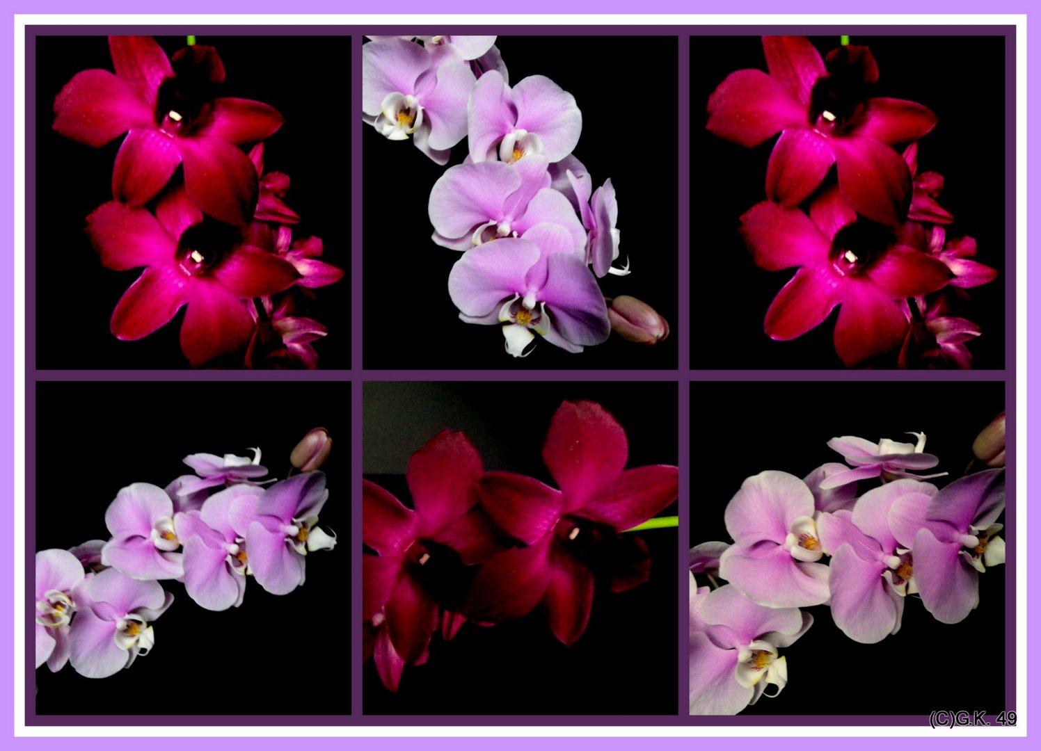 Die Blüten unserer Orchideen in einer Collage zusammen gefasst !