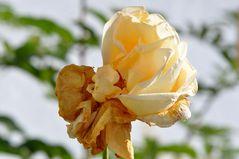 Die Blütenpracht....