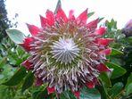 Die Blütenpracht auf Madeira 1