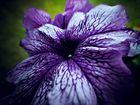 Die Blume.. auf dem Balkon