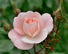 Die Blume aus dem Gemeindebau...........,