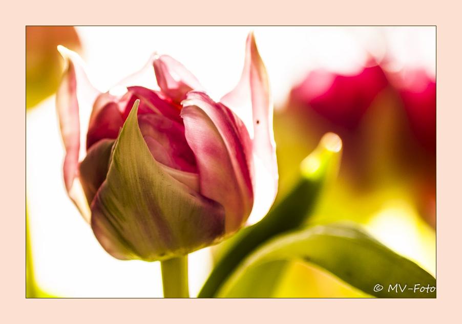 Die Blume bringt Farbe ins Leben
