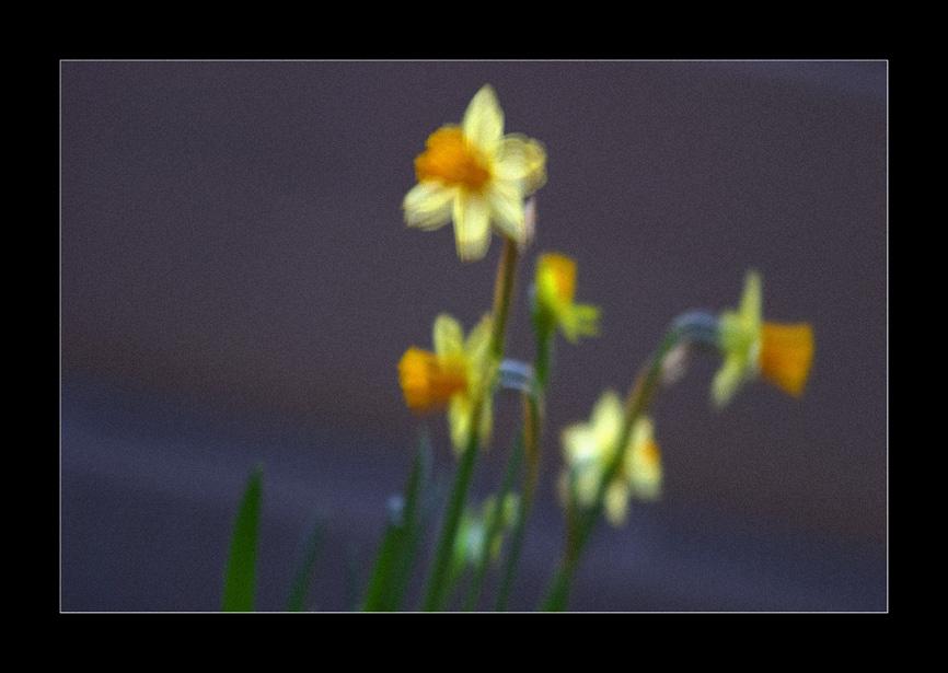 Die Blumen am Grabe meiner Grete
