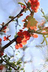 """Die Blumen des Frühlings sind die Träume des Winters """" Gibran khalil gibran"""