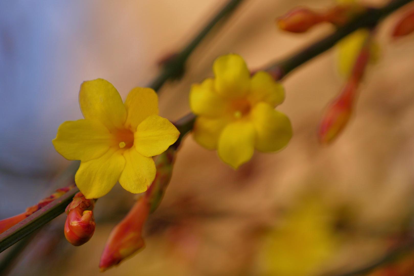 die Blumen im Winter...