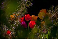 Die Blumen im.Sonnenlicht.