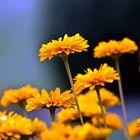 Die Blumen in Nachbar´s Garten