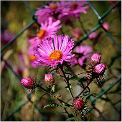 Die Blumen machen den Garten, nicht der Zaun.