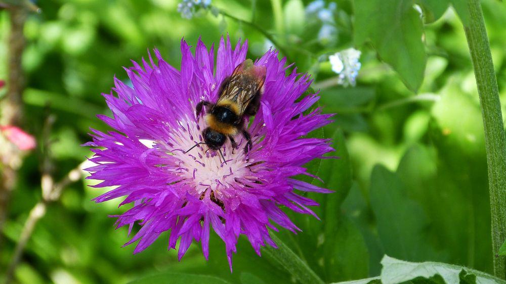 die Blumen meiner Frau. Foto & Bild | pflanzen, pilze
