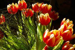 """Die Blumen sind besorgt.........für die  """"fc""""  Damen......"""