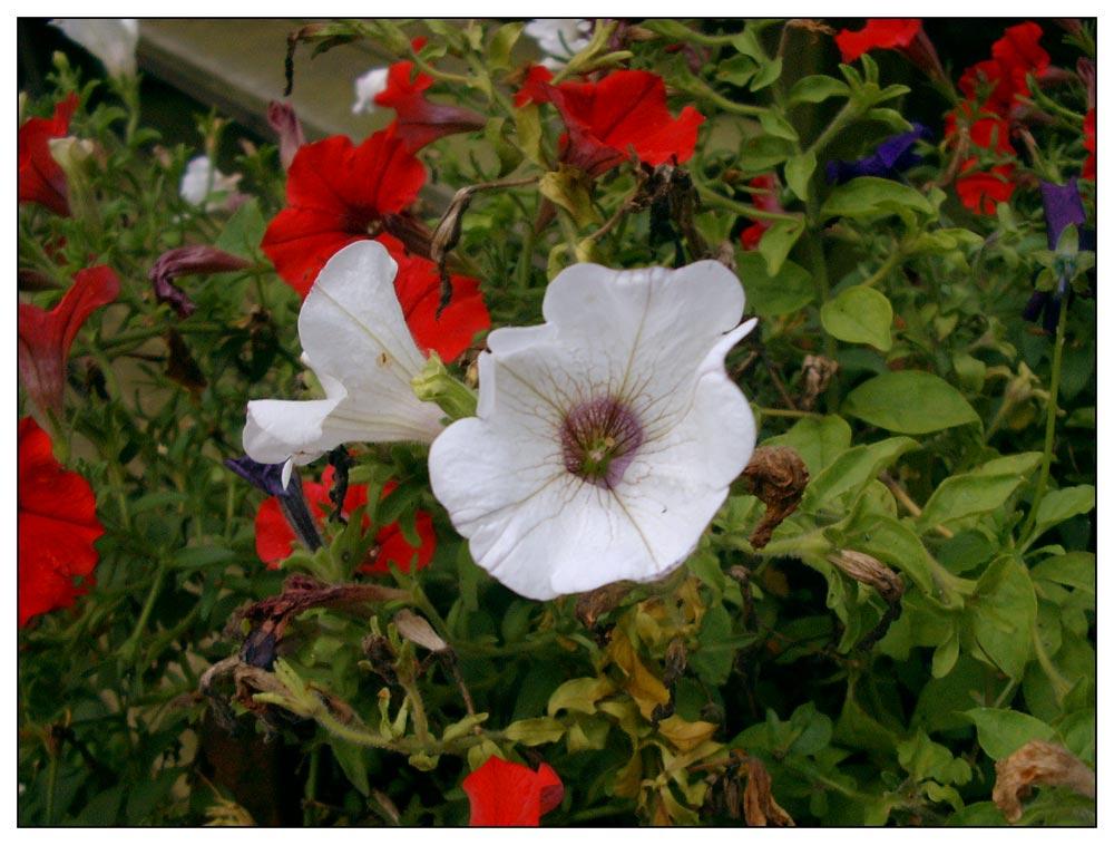 Die Blumen wachsen noch