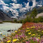 Die Blumenwiese am Gletschergrund.