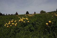 Die Blumenwiese...