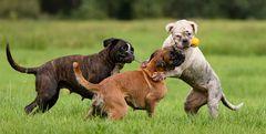 Die Boxer Gang