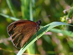 Die braunen sind wieder da. Glücklicherweise nur die Schmetterlinge 2 (:o)