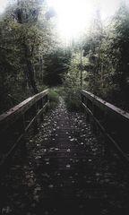Die Brücke im Wald