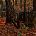 Die Bütt im Walde
