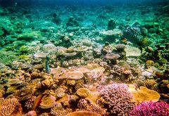 Die bunte Welt im Atoll