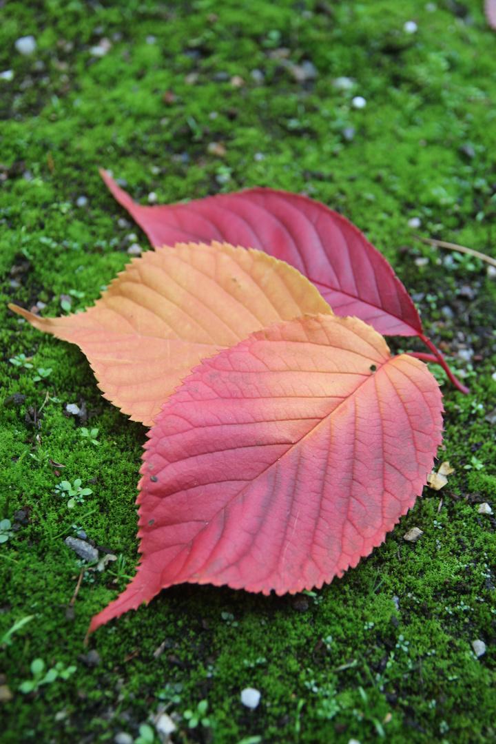 Die bunten Dinge im Herbst II