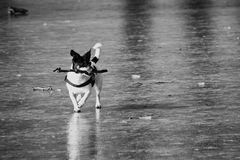 Die, die übers Wasser laufen kann