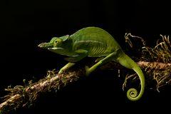 Die Drachen Madagaskars