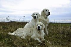 Die Drei