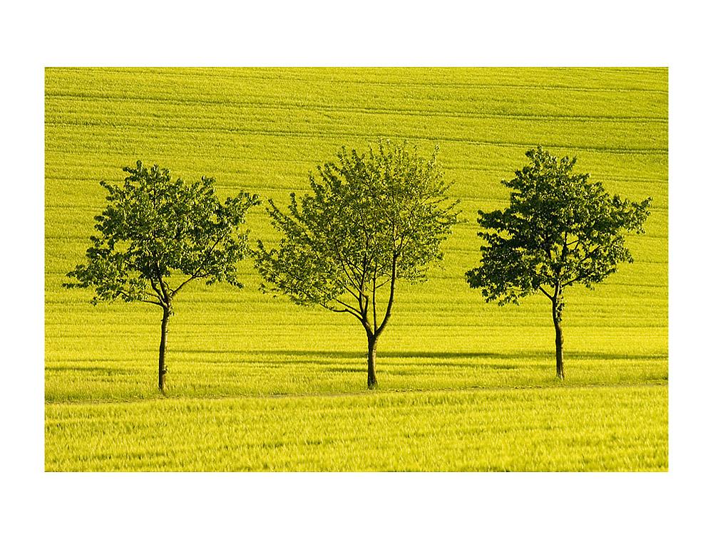 """Die drei Freunde...- ...oder: """"positiv Denken"""" ist gelb..."""