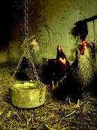 Die Drei vom Hühnerstall