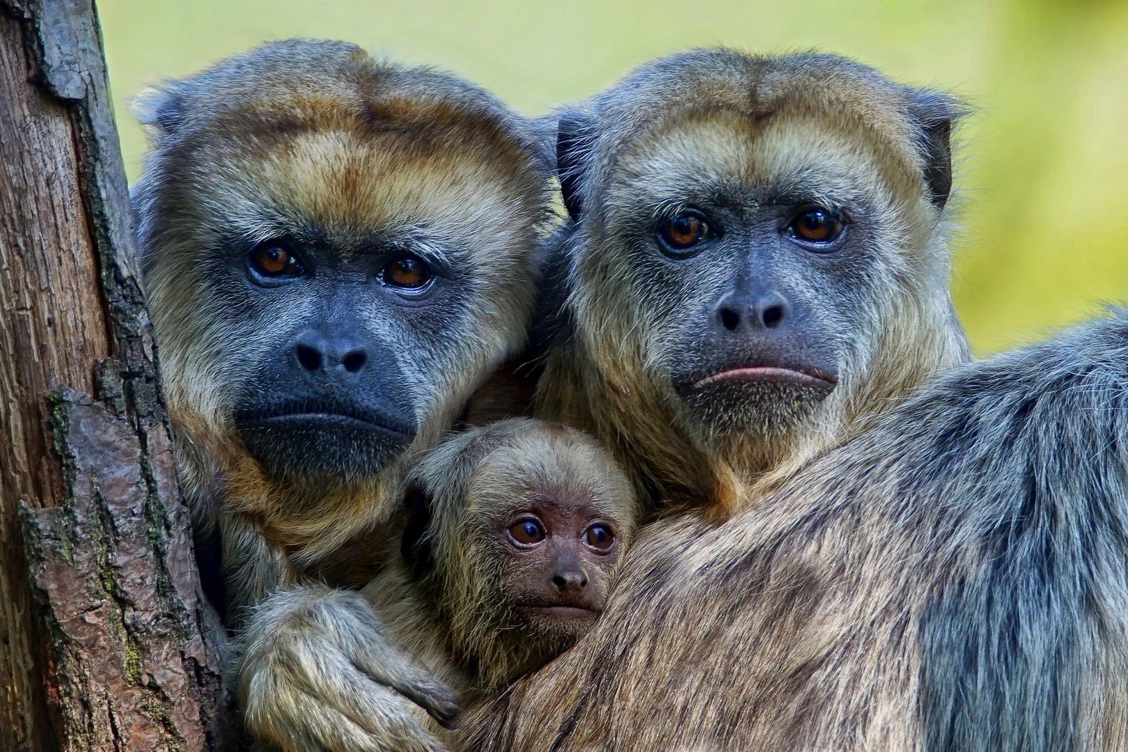 Die drei vom Leipziger Zoo