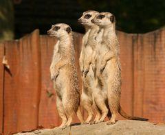 Die Dreisten Drei :-)