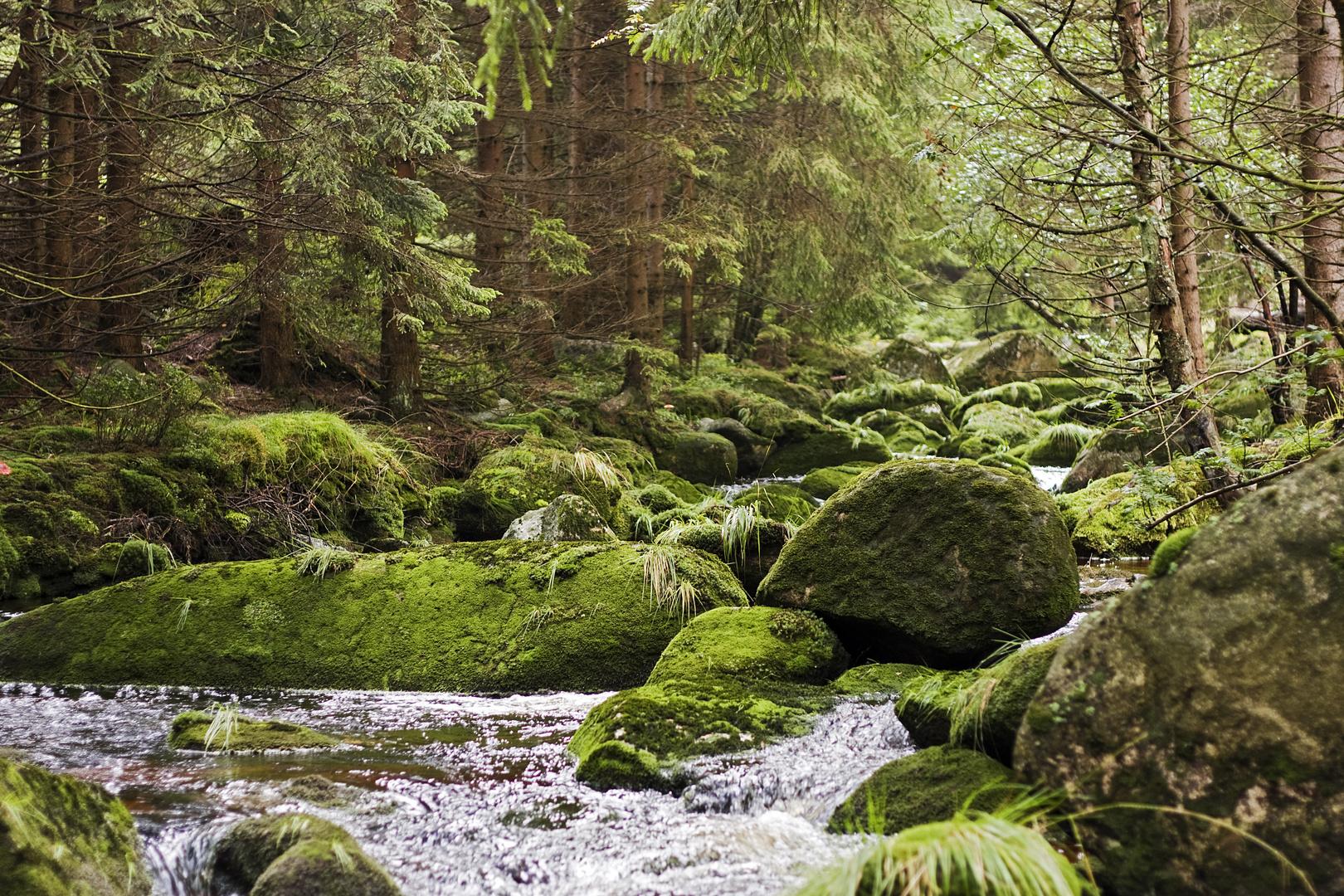 Die Ecker im Harz