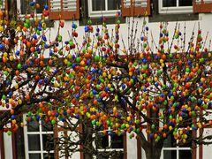 Die Eier wachsen auf den Bäumen
