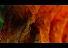 Die eigene Haut so dünn wie ein Blatt im Herbst... alles bricht... und...
