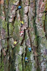 Die Eiger Holzwand