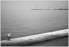 Die Einsame