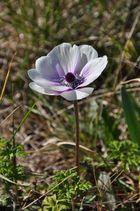 Die einsame Blume