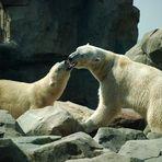 Die Eisbären