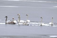 Die Eisbrecherflotte