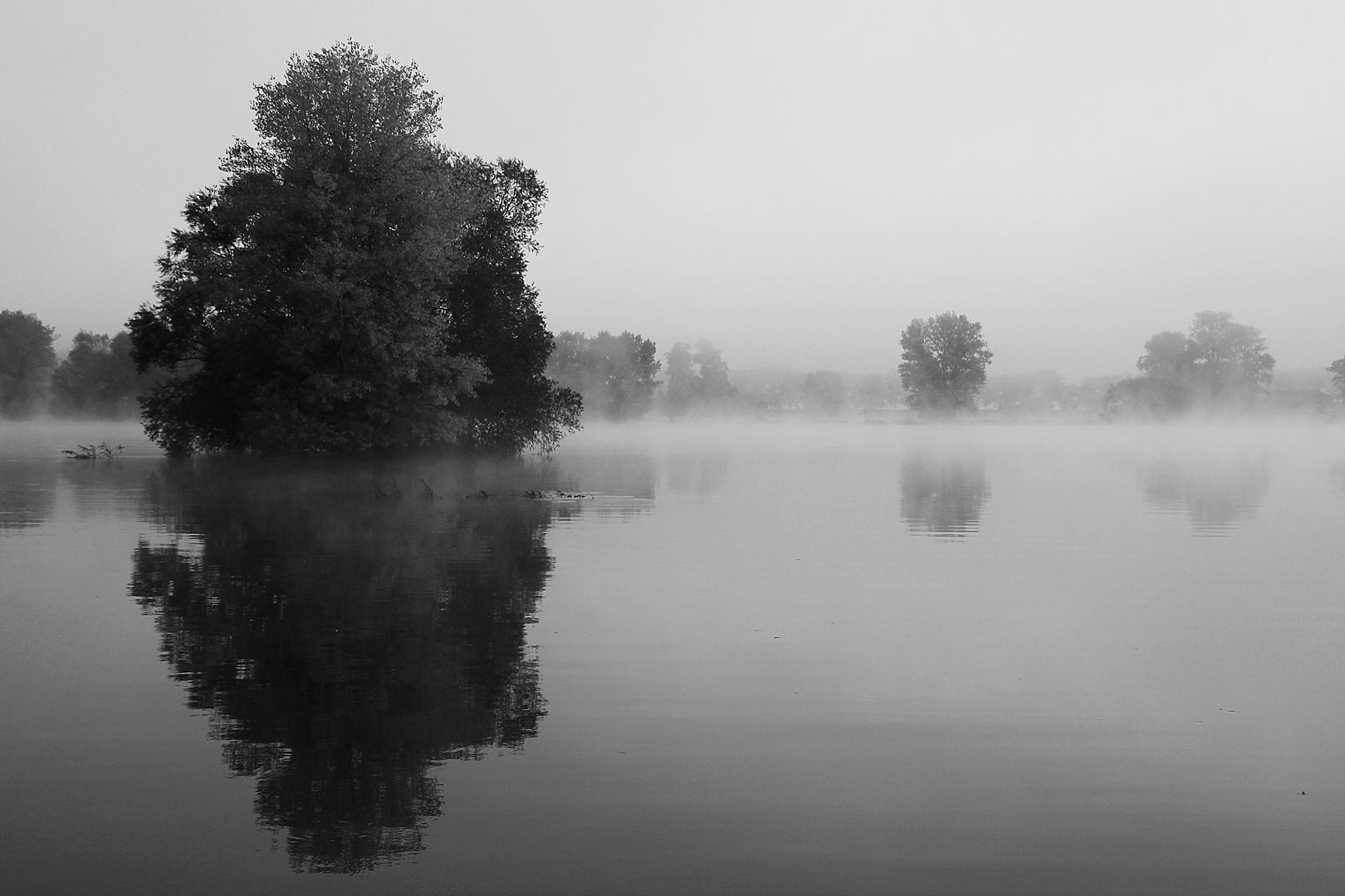 Die Elbe im Nebel