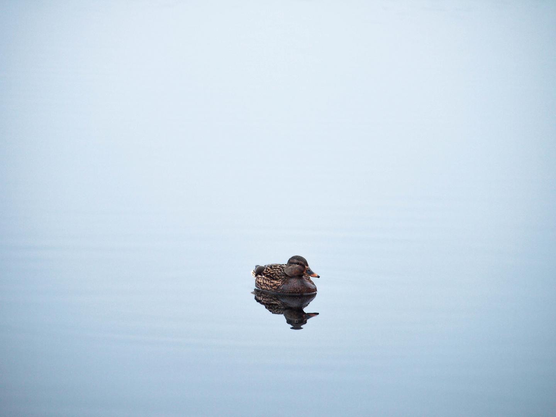 Die Ente im Nichts