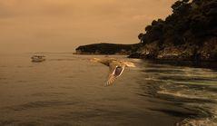 Die Ente und das Meer