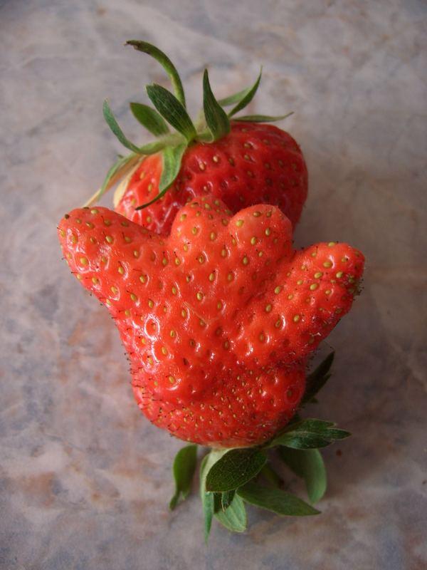 """Die Erdbeer""""hand"""""""