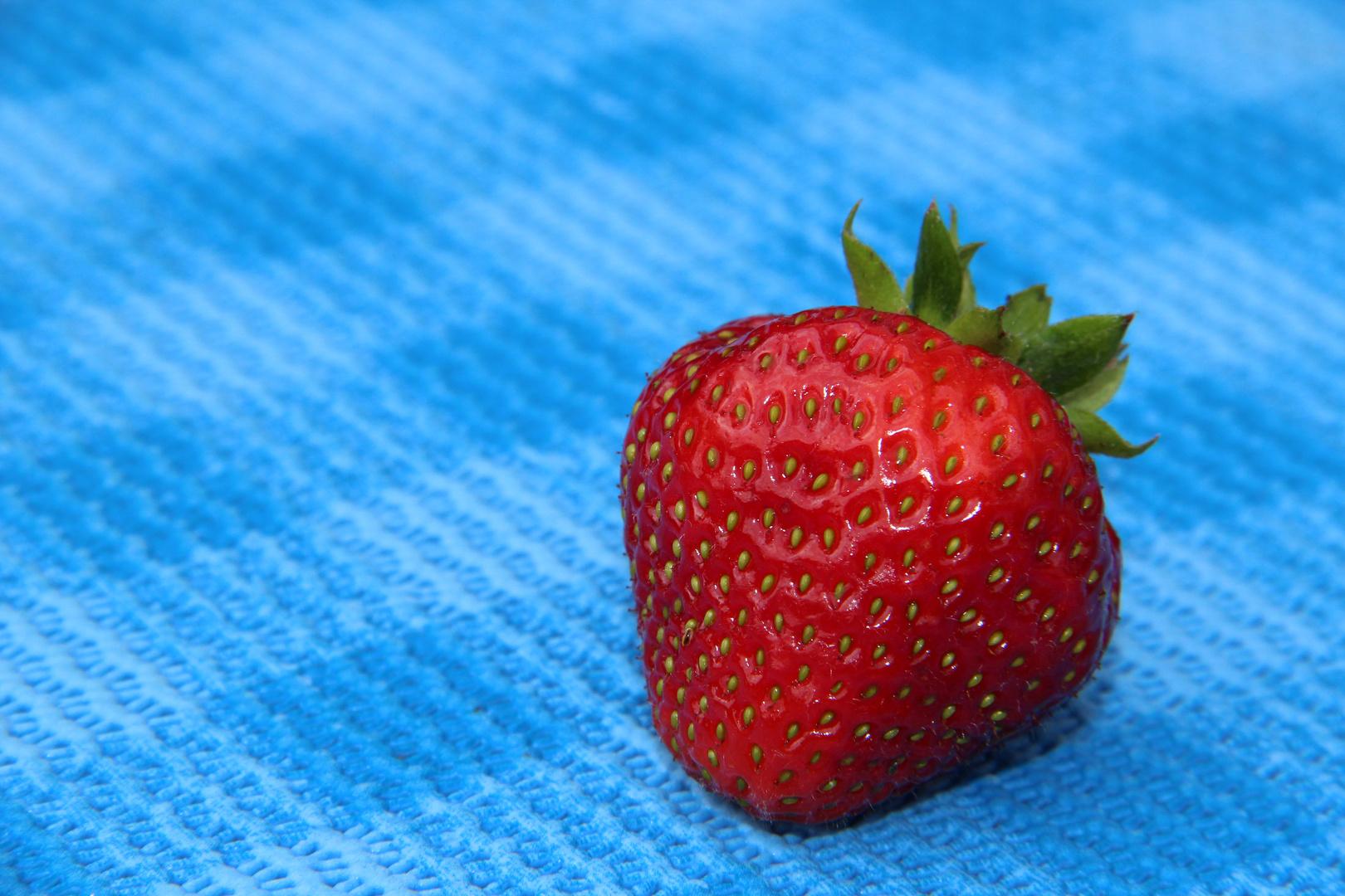 Die Erdberre