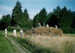 Die Ernte - Harvest-time - La moisson