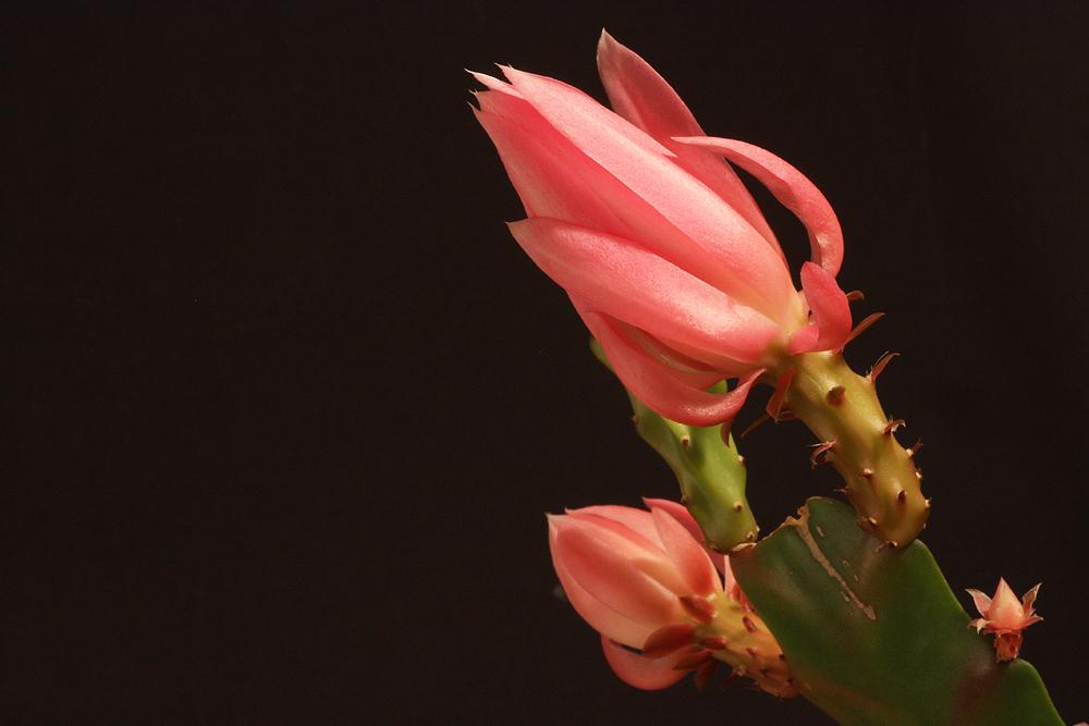 Die erste Blüte...