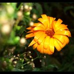 .: Die Erste Blume :.