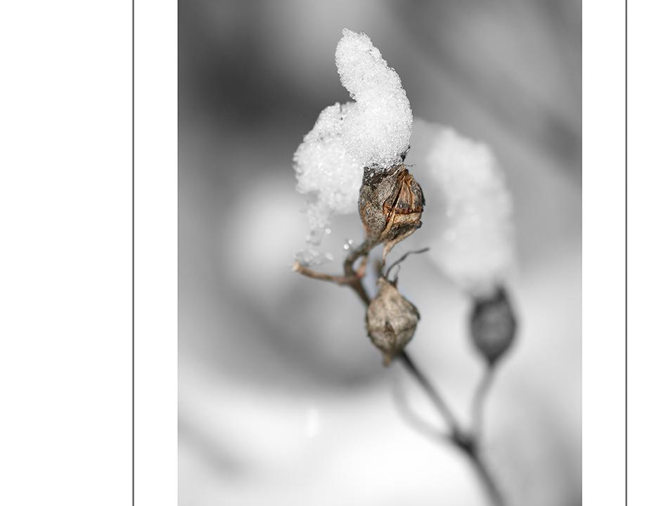die erste kristallbildung in diesem winter