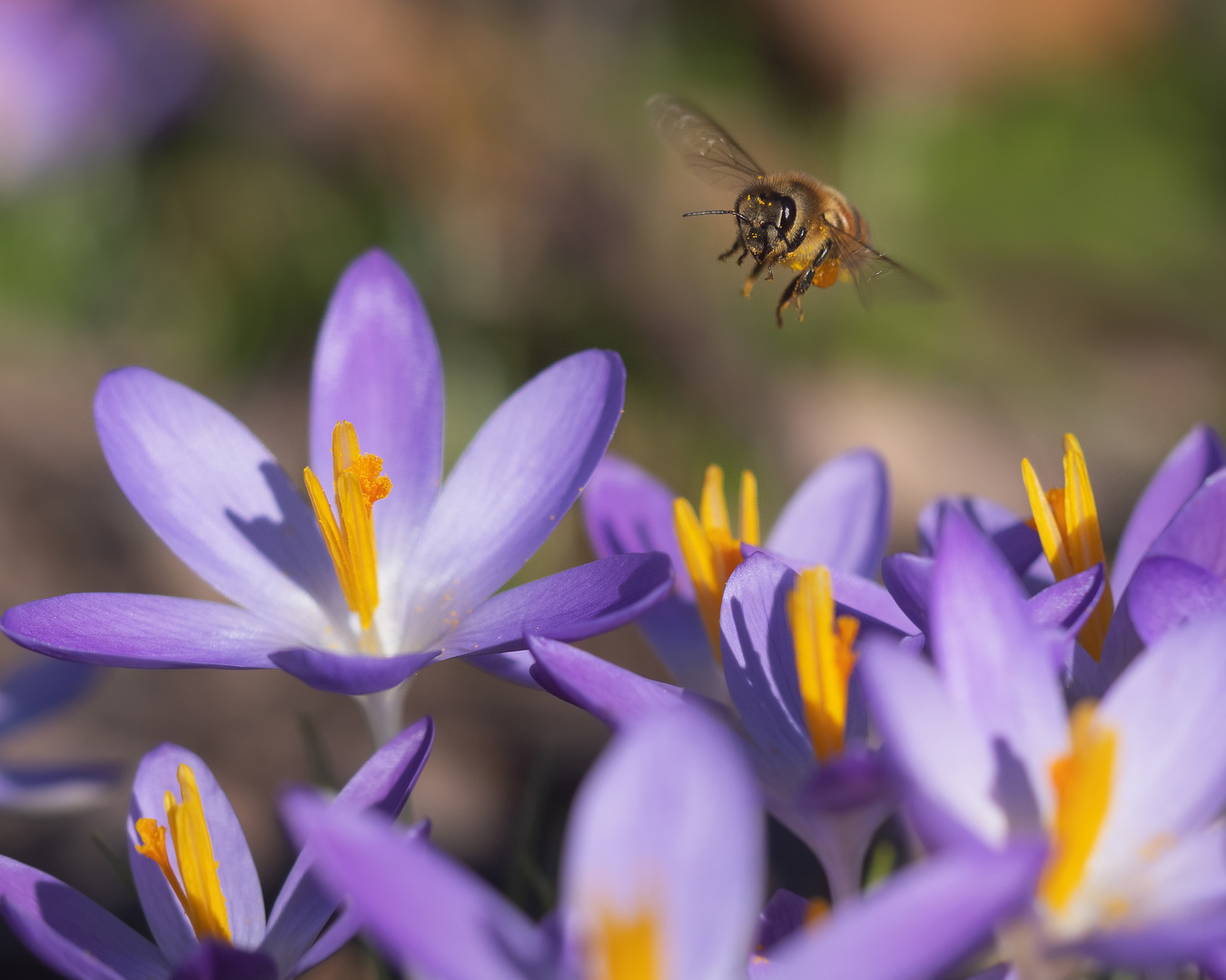 Die ersten Bienen