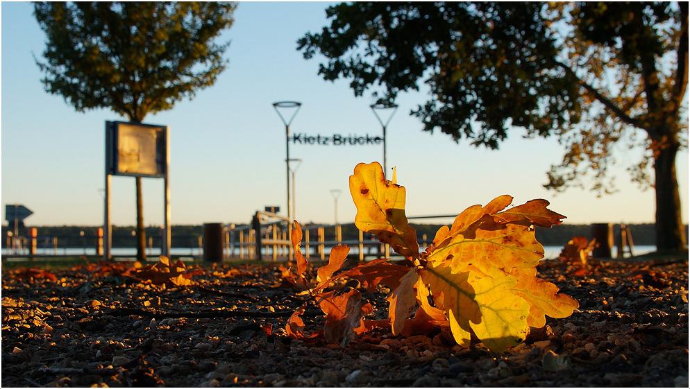 Die ersten Blätter fallen